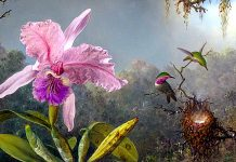 Cattleya Orchid And Three Hummingbirds di Martin Johnson Heade