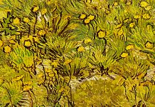 A Field of Yellow Flowers. Vincent van Gogh